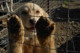 14 nap után el lehet altatni a kóbor kutyákat