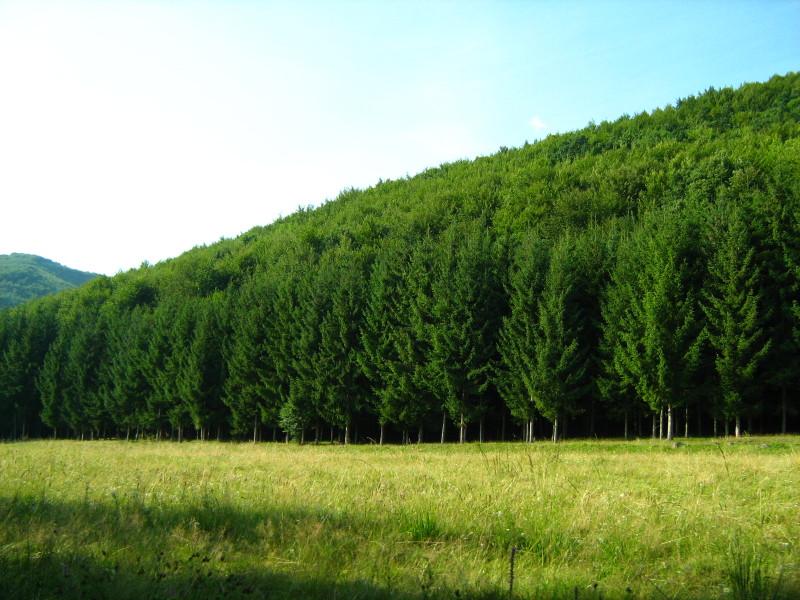Visszaszolgáltatott erdőt szerezne vissza az Erdészeti Hivatal