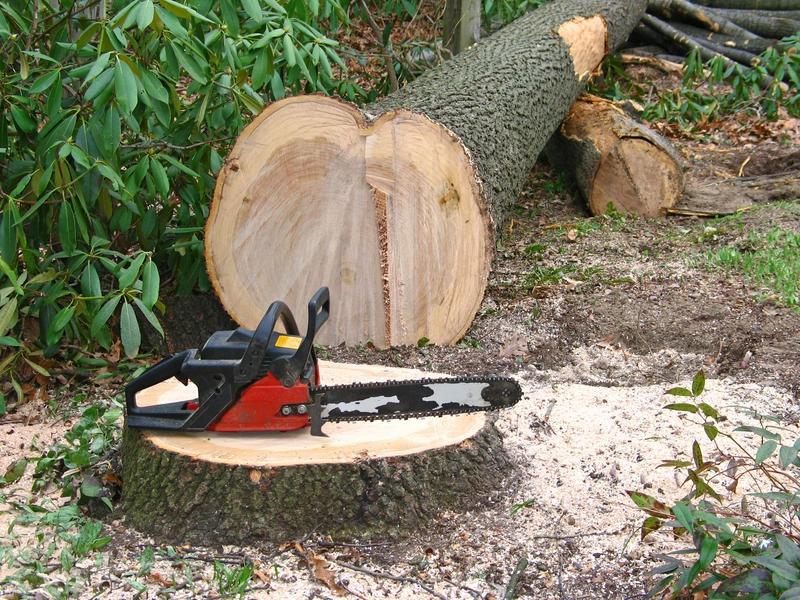 Komoly gondot jelent Romániában az illegális fakitermelés