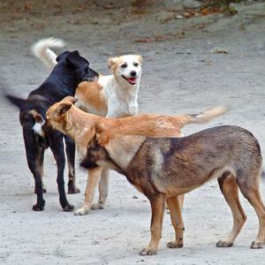 Megkezdték Bukarestben a gazdátlan kutyák elaltatását
