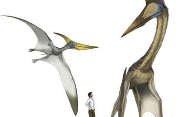 Új dinoszauruszfaj maradványaira bukkantak Romániában