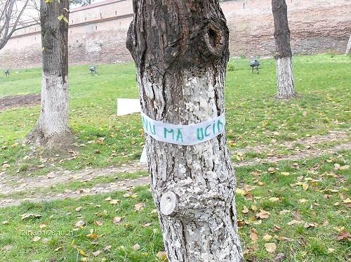 A kivágott fák miatt tüntettek