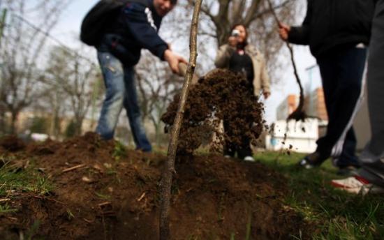 Florea új terve: Minden újszülöttnek egy fa