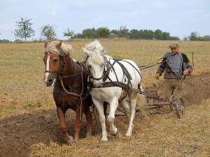 Szigorítják a földvásárlás feltételeit