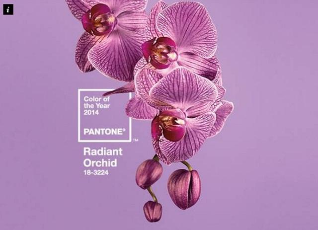 A Radiant Orchid lesz 2014 színe