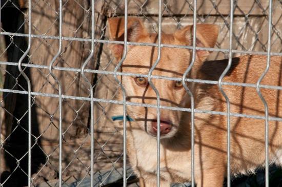 Jótékonysági koncert a kóbor kutyákért