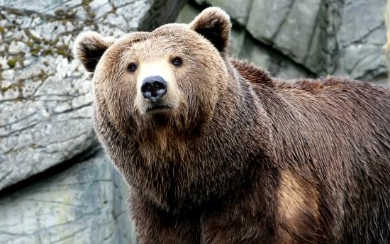 Medvék jártak a Somostetőn