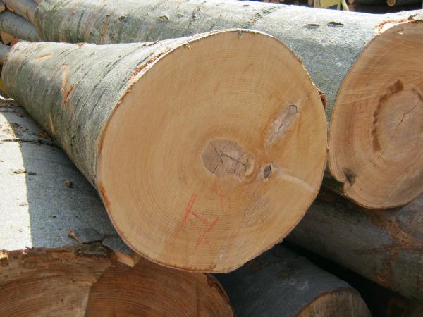 Az osztrák Schweighofer vásárolja fel a romániai fa 15 százalékát