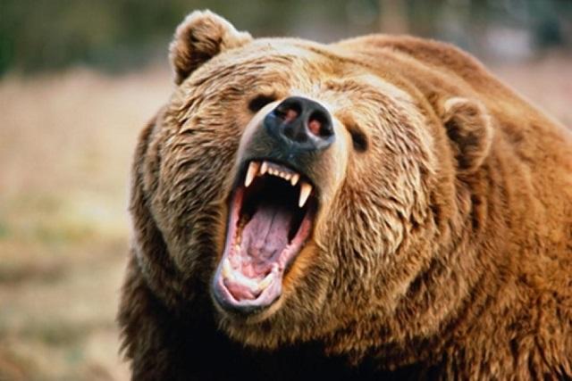 A csendőrök segítségét kérték a medve által megkergetett turisták