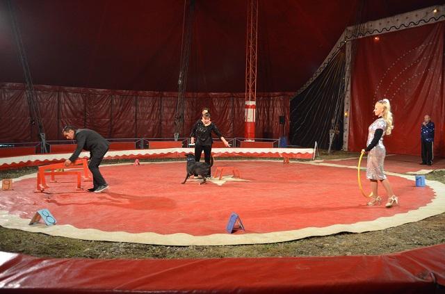 cirkusz8