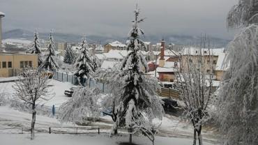 Fákat, villanyoszlopokat döntött ki a friss hó Csíkszeredában
