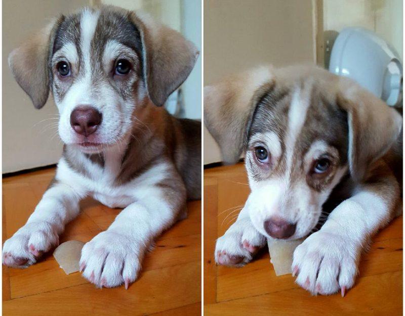 Szinte lehetetlen albérletet találni Marosvásárhelyen, ha kutyával költöznél!