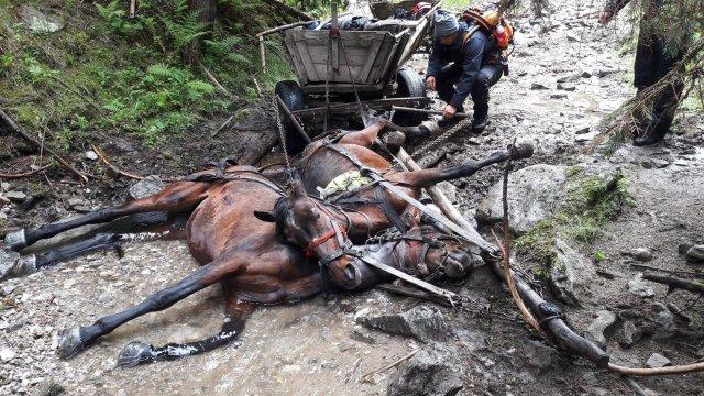Órákon keresztül mentették a hideg vízben elgémberedett lovakat – FOTÓK