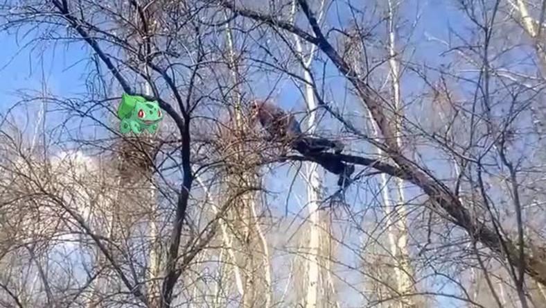 Lezuhant a fáról egy Pokemon Go játékos