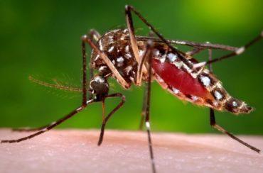 Megvan a zikavírus harmadik áldozata