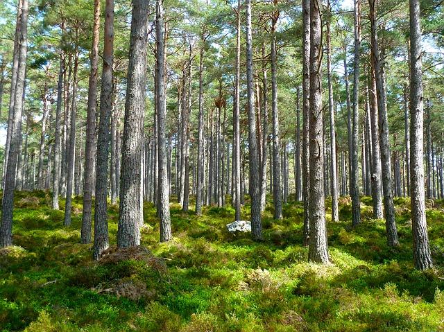 Az IKEA 12.800 hektár erdőt vásárolt fel Romániában