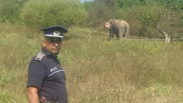 Egy cirkuszból megszökött elefántot köröztek a román rendőrök csütörtökön