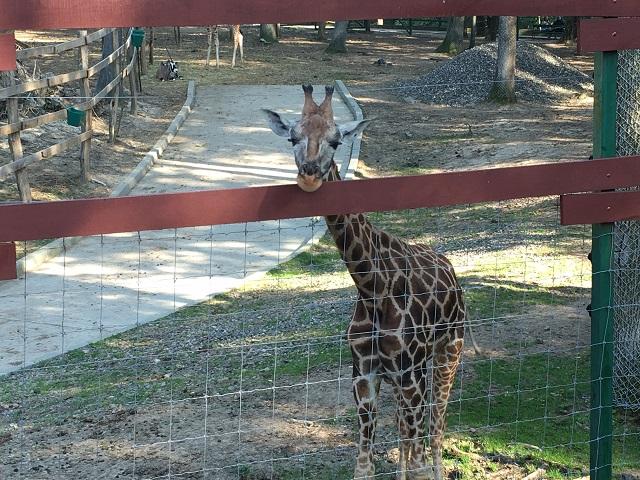 A Marosvásárhelyi Állatkert az országból egyedüliként kerül fel az állatkertek világtérképére