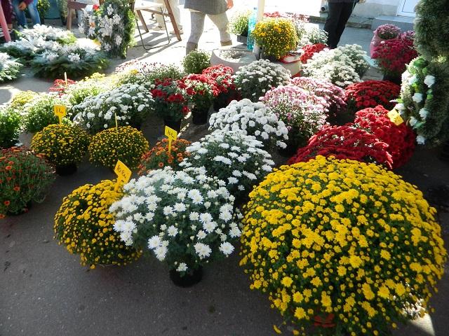 Több mint 80 termelő a főtéri virágvásáron