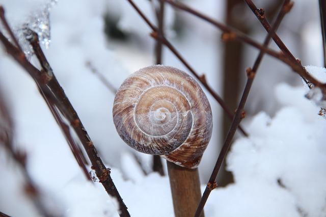 Meteorológusok: reggelente hideg lesz a következő napokban, a hegyekben ismét havazni fog