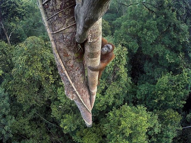 Fügét vadászó orangutánról készített kép lett az év természetfotója, magyar fotósokat is díjaztak!