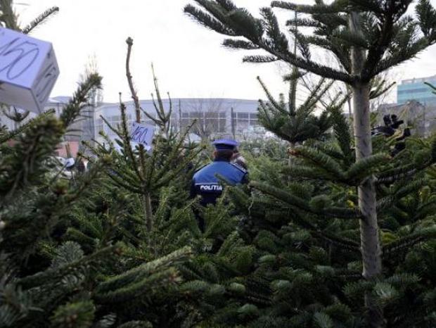 25.000 lej bírságot szabtak ki egy szupermarket előtti karácsonyfa árusra Marosvásárhelyen