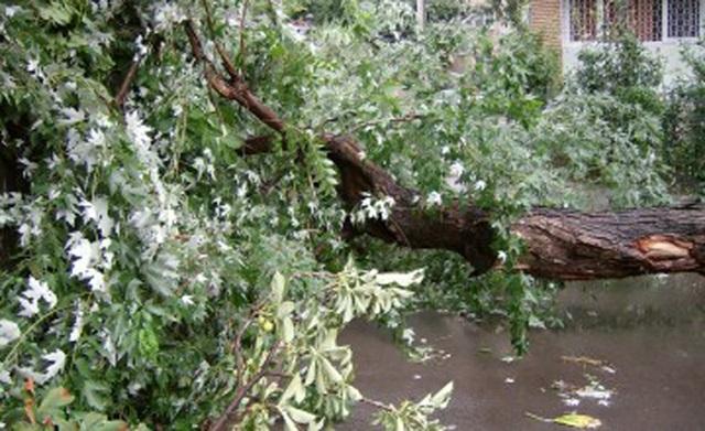 Egy szél által kidöntött fa 3.500 fogyasztót hagyott elektromos áram nélkül Maros megyében