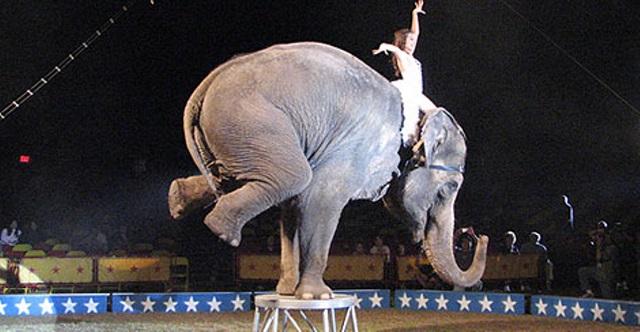 Kitiltották az állatidomár-számokat a romániai cirkuszokból