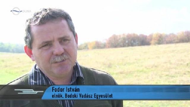 Sepsibodok polgármestere: Nem normális, hogy a medve az állomáson járkáljon; jó, hogy nem történt tragédia