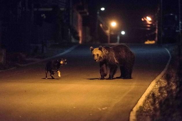 Ismét medvéket fotóztak Tusnádfürdő utcáin