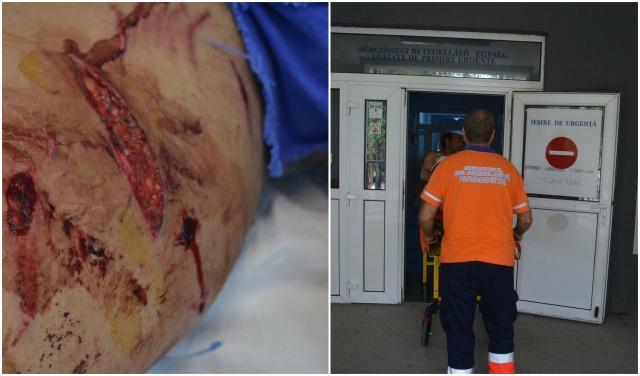 Emberre támadt a medve Hargita megyében – Nyílt levél a miniszterhez: hagyja jóvá a kilövési engedélyt