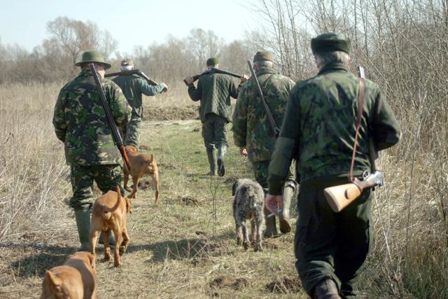 Több tíz vadász, erdész, csendőr, környezetvédelmi őr keresett egy sebesült medvét