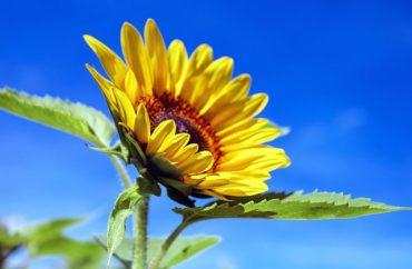 22 és 32 Celsius-fok közötti csúcshőmérsékletekre számíthatunk a következő két hétben; eső július 6-16 között várható