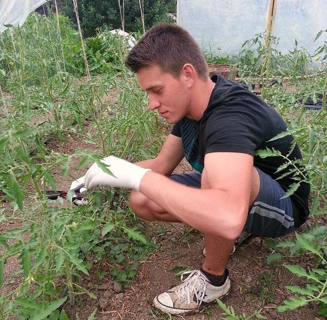 """""""Célom, hogy az emberek jobban értékeljék az őstermelő munkájának gyümölcsét"""" – Új kertészet indult Sóváradon"""