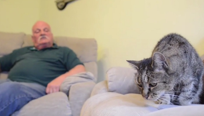 Elhunyt a világ legidősebb macskája, 32 éves volt (ami macska-évben 144)