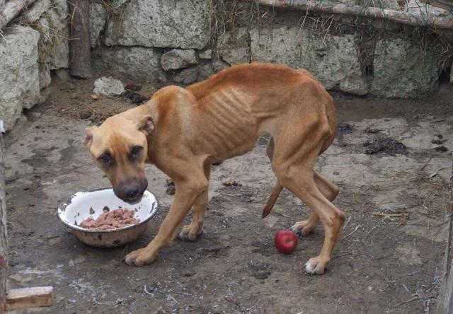 1-től 3 évig terjedő büntetést rójanak ki az állatkínzókra