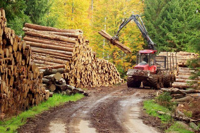 Maros megyében 120%-kal nőtt az illegális erdőkivágás az elmúlt egy évben