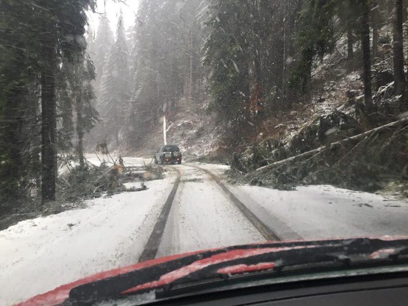 Úttestre dőlt fa miatt lezárták az utat a forgalom elől a Bucsin-tetőn
