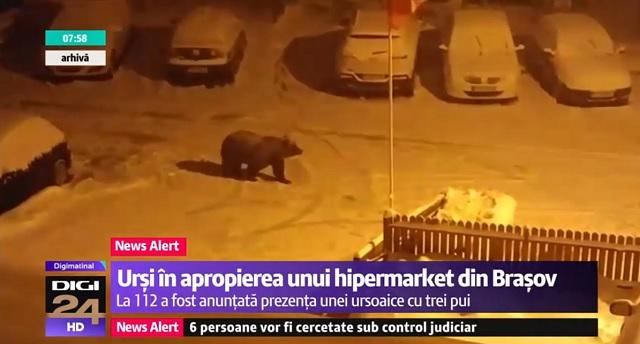 Három bocsával sétált Brassó egyik forgalmas bevásárlóközpontja mellett egy medve