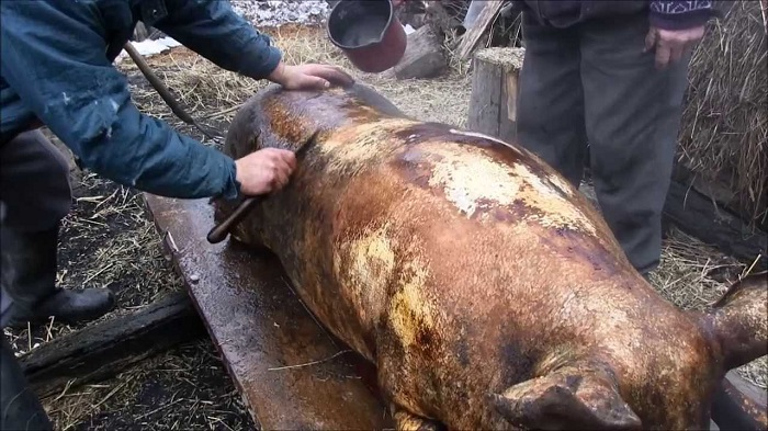 Maros megyében trichinellózisos fertőzést mutattak ki egy leölt sertés húsában
