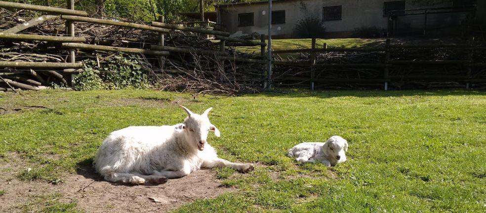 Két éhes román levágott egy kecskét egy berlini állatsimogatóban