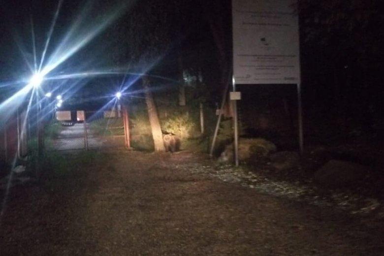 Medvét kellett elűzniük a csendőröknek a csíkszeredai megyei kórház parkolójából