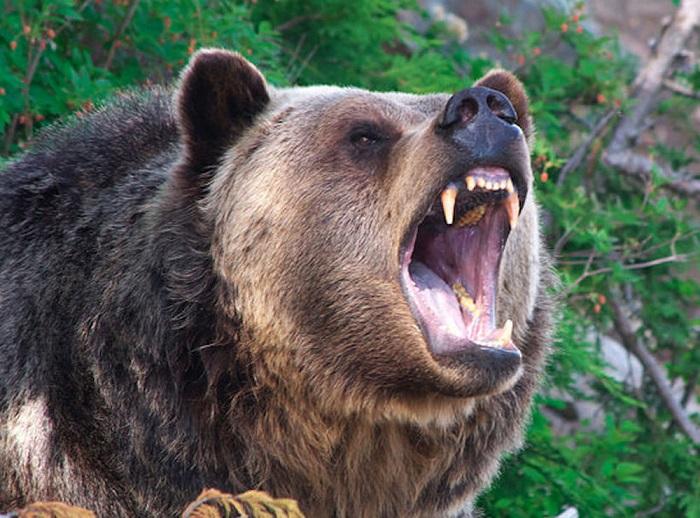Amputálni kellett egy Maros megyei lány lábát, miután medve támadt rá